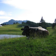 St. Koloman Landschaft